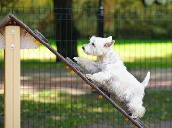 plac zabaw dla psow